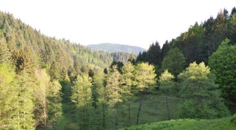 elskoven og kærligheden